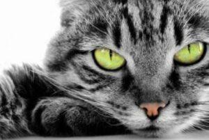 Hoe bereken je de leeftijd van de kat in mensenleeftijd